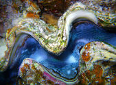 Close-up mollusk under water — Stock Photo