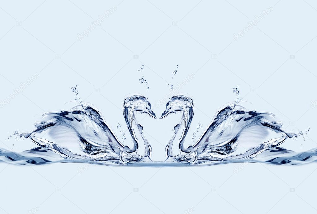 Two water swans in love forming a heart between them. — Stock Photo #2465327