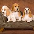 Stock Photo: 3 Cute Beagles on miniature sofa