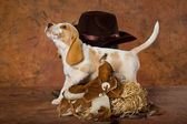 Pretty Beagle with cowboy gear — Stock Photo