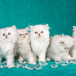 Royalty-Free Stock Photo: 5 Chinchilla kittens on green