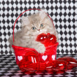 Chinchilla kitten in Valentine basket — Stock Photo
