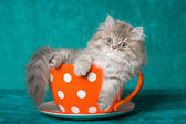 Chinchilla kitten in oversized cup — Stock Photo