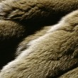 Furs and Leathers — Foto de Stock