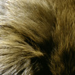 Furs and Leathers — Stock Photo