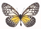 Hermosa mariposa aislada en blanco ba — Foto de Stock