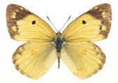 Beautiful Butterfly Isolated on White Ba — Stock Photo
