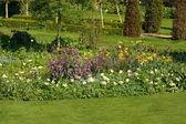 English garden — Stock Photo