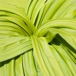 Green plant background — Stock Photo #2152713