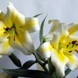 Branch of yellow lilies — Stock Photo