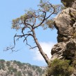 Tree on mountainside — Stock Photo