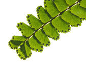 Branch with leaf — Stock Photo