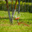 Stock Photo: Watering by water
