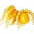 Physalis a white background. — Stock Photo #2303777