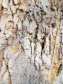 Tree bark3 — Stock Photo