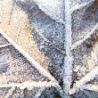Stock Photo: Maple leaf covered with frost 4