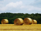 Gold rolls in a countryside 1 — Stock Photo