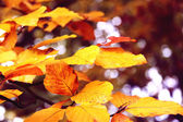 Orange leaves — Stock Photo