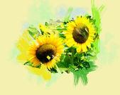 Dvě slunečnice — Stock fotografie