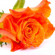Bouquet from orange roses. — Stock Photo