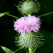 Stock Photo: Prickle
