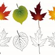 Set of autumn leaves. — Stock Vector
