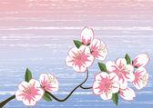 樱花 — 图库矢量图片