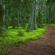 Mysterious forest path - Stock Photo