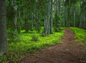 Mysterious forest path — Stock Photo