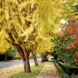 Fall sidewalk — Stock Photo #2107437