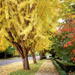 Fall sidewalk — Stock Photo