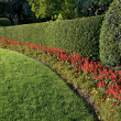 Beautiful hedge — Stock Photo