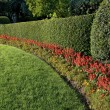 Stock Photo: Beautiful hedge