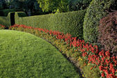 Beautiful hedge — Stockfoto