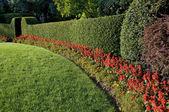 Beautiful hedge — Stock Photo
