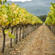 Vineyard row, napa valley,california — Foto Stock
