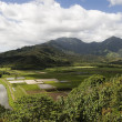 Stock Photo: Island farming, Kauai