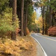Stock Photo: Scenic road