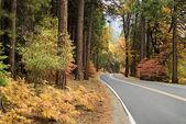 Scenic road — Stock Photo