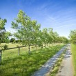 Scenic tree lined dirt road — Stock Photo