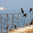 Birds on old pier — Stock Photo #2233864