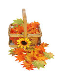 Country basket of fall leaves — Stock Photo