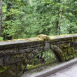 Moss covered bridge walkway - Stock Photo