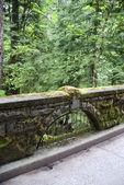 Moss covered bridge walkway — Stock Photo