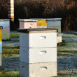 Langstroth Bee Hives — Stock Photo