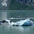 Photo: Iceberg from Tidewater Margerie Glacier