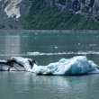 Stock Photo: Iceberg from Tidewater Margerie Glacier