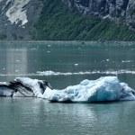ledovec od tidewater ledovec margerie — Stock fotografie