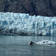 Stock Photo: Iceberg and Tidewater Margerie Glacier