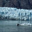 ストック写真: Iceberg and Tidewater Margerie Glacier